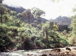 Amazon rainforests
